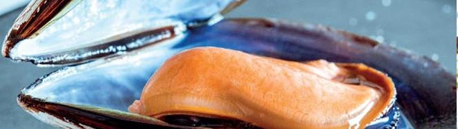 Tesoros del mar gallego